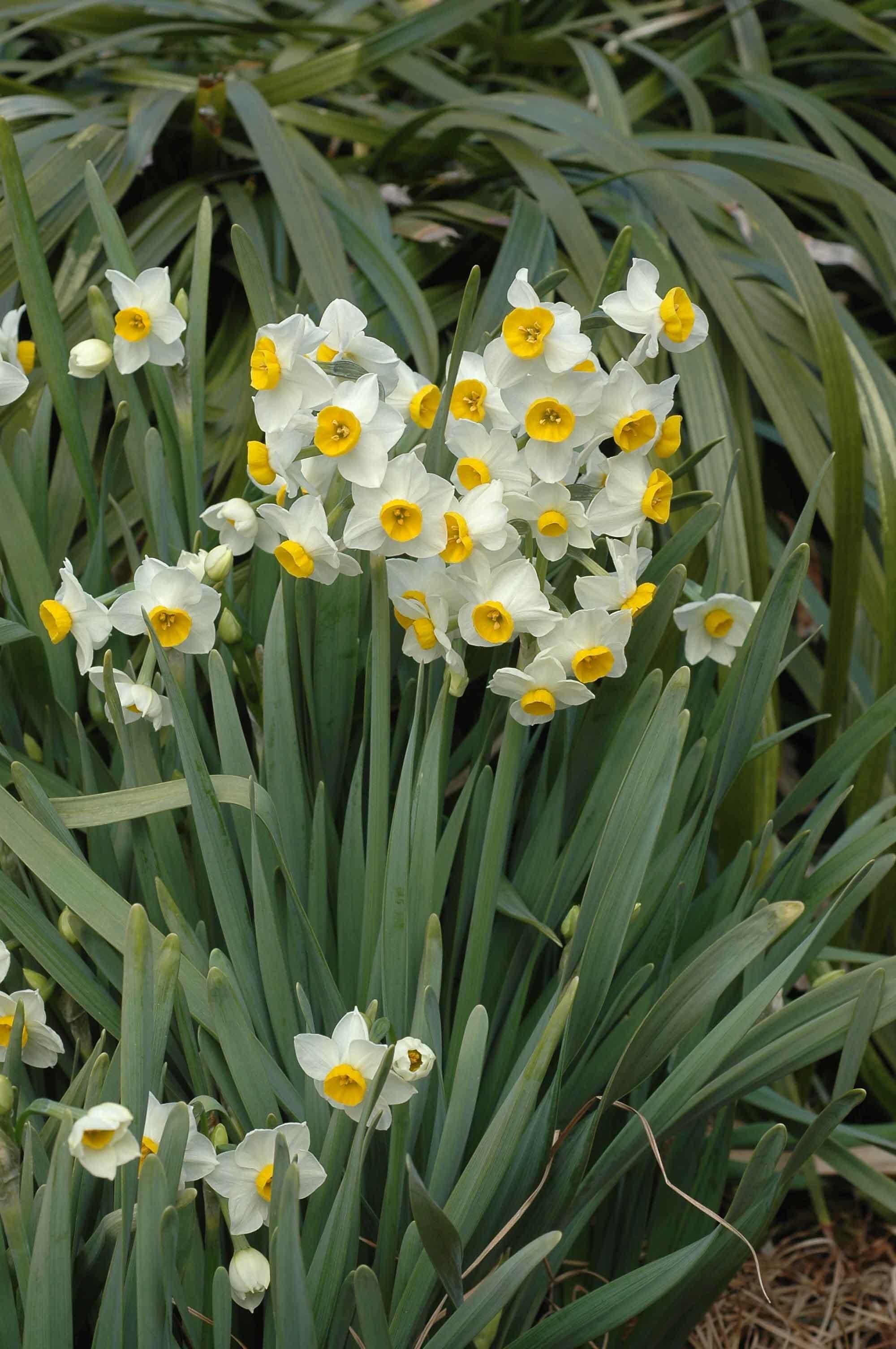 エレカシ 冬 の 花
