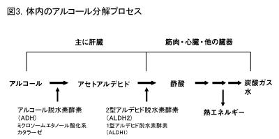 体内のアルコール分解プロセス